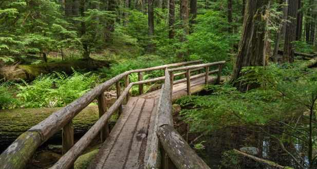 picture of forest trail indicating how to get a divorce in Oregon